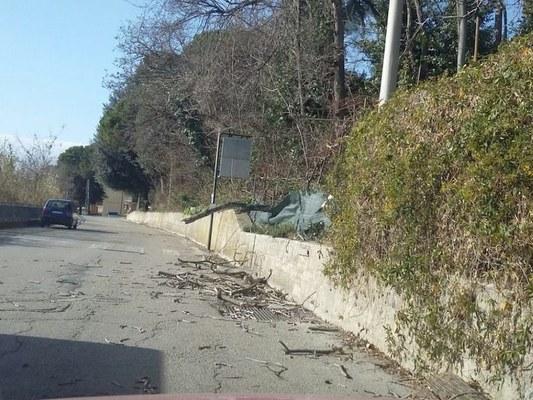Forte vento: interventi in buona parte della provincia per rimuovere alberi caduti